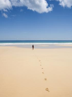South America, Brazil, Pernambuco, Fernando De Noronha Island by Alex Robinson