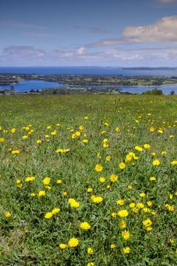 Wild meadowlands on Chiloe Island, Patagonia, Chile, South America by Alex Robinson