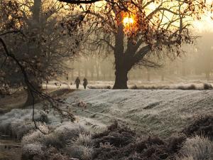 A Couple Walk in the Winter in Richmond Park by Alex Saberi
