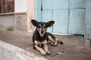A Dog Sitting on a Pavement in Lencois, Chapada Diamantina National Park by Alex Saberi