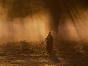 A Dog Walker Makes His Way with Four Dogs in the Early Morning Mist in Richmond Park by Alex Saberi