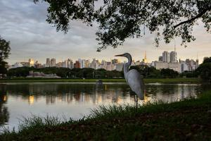 A Great Egret Looks Out over a Lake in Sao Paulo's Ibirapuera Park by Alex Saberi