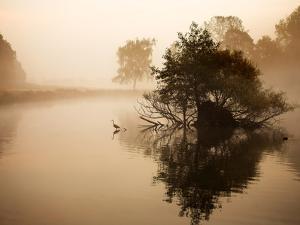A Grey Heron, Ardea Cinerea, Waits to Catch Fish on Pen Ponds by Alex Saberi