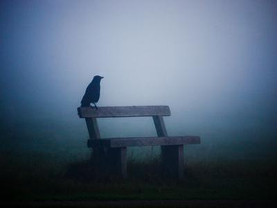 A Large Western Jackdaw Sits on a Bench in Dense Fog