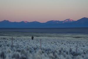 A Man at Dusk Crosses the Wilderness of the Sajama National Park, Bolivia by Alex Saberi