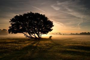 A Solitary Fallen Live Tree Under a Dramatic Sky on a Misty Morning by Alex Saberi