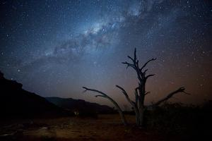 A Tree under a Starry Sky, with the Milky Way in the Namib Desert, Namibia by Alex Saberi