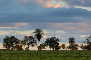 A Typical Farm Scene in Bonito with Cerrado Vegetation, Brazil by Alex Saberi