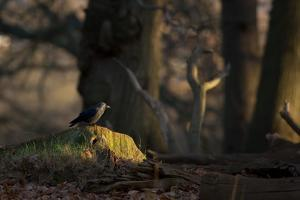 A Western Jackdaw, Corvus Monedula, Perching on a Tree Stump in London's Richmond Park by Alex Saberi