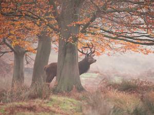 Autumn Lord by Alex Saberi