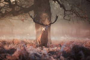 Monarch of the Forest by Alex Saberi