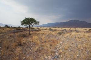 Namib-Naukluft National Park at Sunrise by Alex Saberi