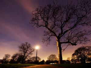 Nightime in Hyde Park, London by Alex Saberi