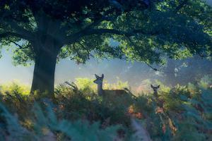 Red Deer Does on an Early Autumn Morning in Richmond Park by Alex Saberi