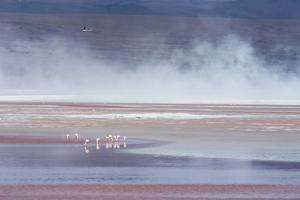 Salt Dust Shrouds James' Flamingos Foraging in Laguna Colorada by Alex Saberi