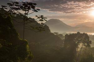 Serra Do Mar Forest in Sao Paulo State in Brazil by Alex Saberi