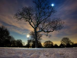 Snow Covered Trees at Night in Hyde Park, London by Alex Saberi