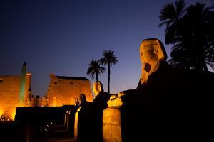 The Avenue of Sphinxes and Luxor Temple Illuminated at Night by Alex Saberi