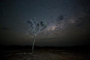 The Milky Way Above a Tree at Night Namib-Naukluft National Park by Alex Saberi