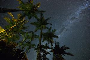 The Milky Way Above the Atlantic Rainforest Jungle and Palm Trees by Alex Saberi