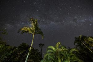 The Milky Way Above Tropical Trees and Foliage of the Atlantic Rainforest, at Night by Alex Saberi