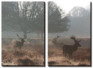 Three Large Deer Stags in the Early Morning Mist in Richmond Park by Alex Saberi