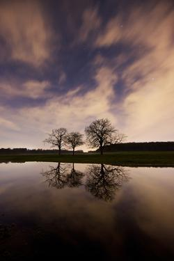 Three Trees Reflected in a Pond in Richmond Park at Night by Alex Saberi