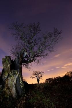 Two Large Oak Trees at Night in Richmond Park by Alex Saberi