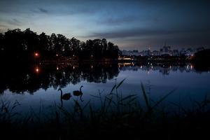 Two Swans in the Lake in Ibirapuera Park at Dusk by Alex Saberi