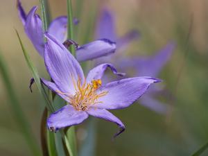 Velloziaceae Flowers in Chapada Dos Veadeiros National Park by Alex Saberi