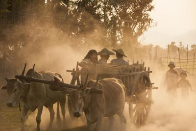 A bull cart kicks up a cloud of dust on the road to Indawgyi Lake, Kachin State, Myanmar (Burma), A by Alex Treadway