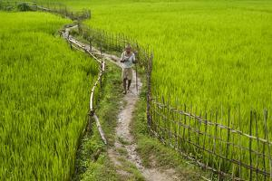 A Pathway Through the Rice Paddies in the Chittangong Hill Tracts, Bangladesh, Asia by Alex Treadway