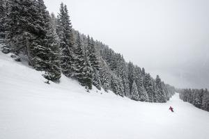 A Skier at Vigo Di Fassa in the Italian Dolomites Skis Down a Piste Through a Forest by Alex Treadway