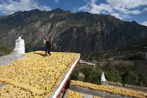 Drying Corn on the Rooftops of Traditional Tibetan Houses by Alex Treadway