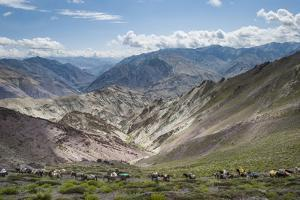 Pack Horses in the Ladakh Region, Himalayas, India, Asia by Alex Treadway
