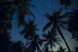 Swaying palm fronds and stars at Palomino on the Carribean coast of Colombia, South America by Alex Treadway