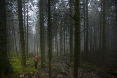 Walking in Beddgelert forest in Snowdonia in Wales. by Alex Treadway