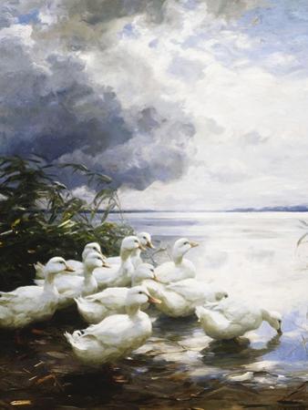 Ducks at the Lake's Edge