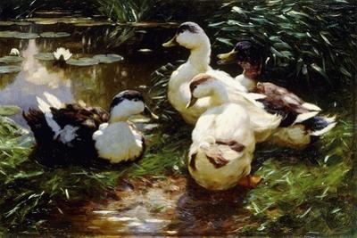 Ducks on a Riverbank