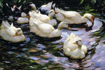 Ducks Swimming in a Sunlit Lake