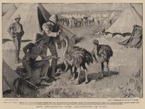 New Regimental Pets, Amusements in Camp by Alexander Stuart Boyd