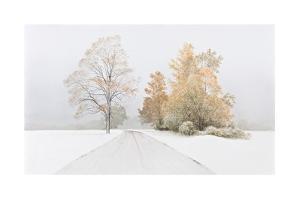 Autumn Snowfall by Alexander Volkov
