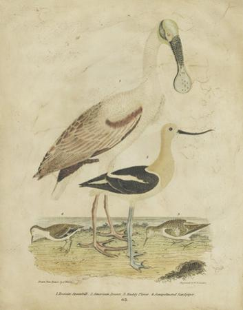Embellished Spoonbill & Sandpipers