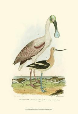 Roseate Spoonbill by Alexander Wilson