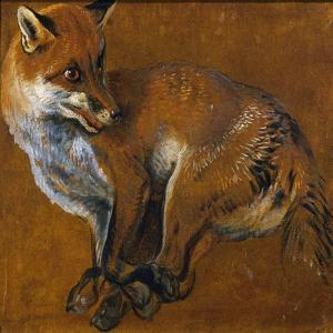 Fox with Legs Tied, by Alexandre-Francois Desportes (1661-1743), France, 18th Century by Alexandre-Francois Desportes