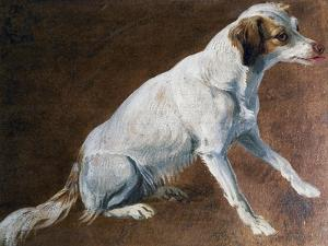 French Spaniel Ancestor, by Alexandre-Francois Desportes (1661-1743), France, 18th Century by Alexandre-Francois Desportes