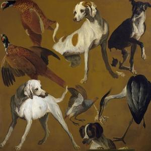 Study of Birds and Dogs, by Alexandre-Francois Desportes (1661-1743), France, 18th Century by Alexandre-Francois Desportes