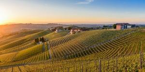 Vineyards at Barbaresco, Piedmont, Italy, Europe by Alexandre Rotenberg