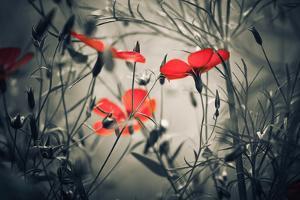 Red Flowers by Alexey Rumyantsev