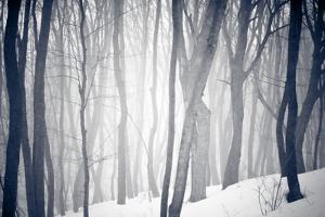 Winter Forest by Alexey Rumyantsev